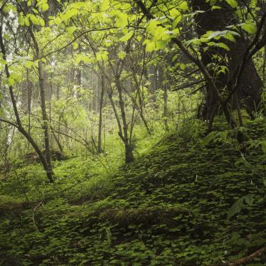green-environment-background-HMRXGVN